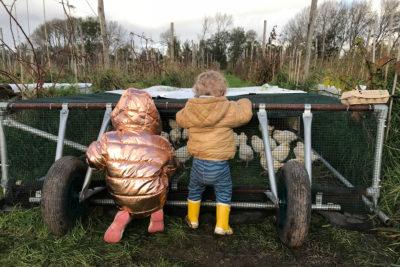 Fruittuin van West Amsterdam Voor kinderen